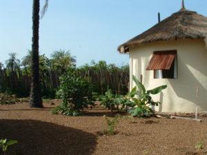 Plants around hut