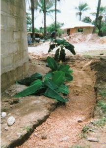 Greywater system being planted
